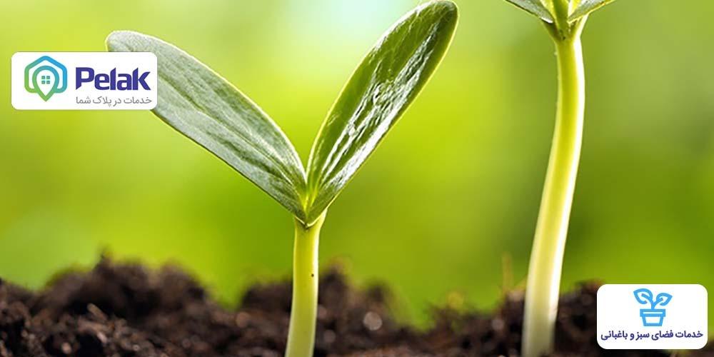 خاک مناسب برای کاشتن انواع درخت